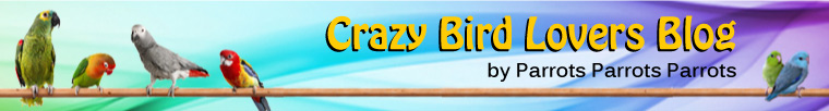 That Crazy Bird Lovers Blog