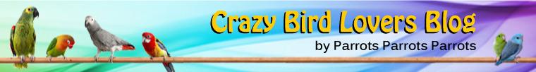 That Crazy Bird Lovers Blog