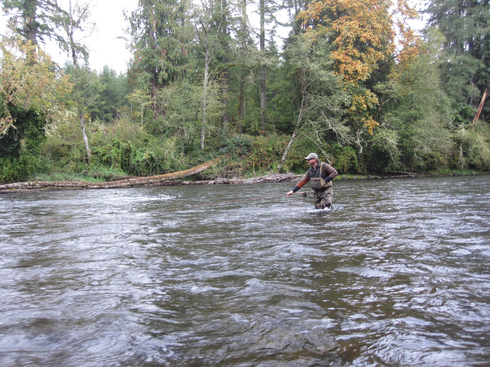 Brian marz 39 s fly fishing oregon blog steelhead fishing for Mckenzie river fishing