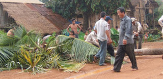 Coconut Tree Kills a 6 Years Child at Dummalasuriya