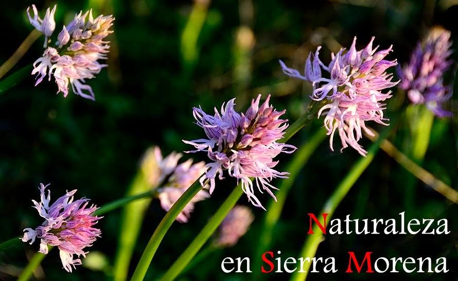 Naturaleza en Sierra Morena