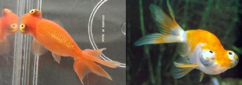 Aquarium Decorations Online Canada