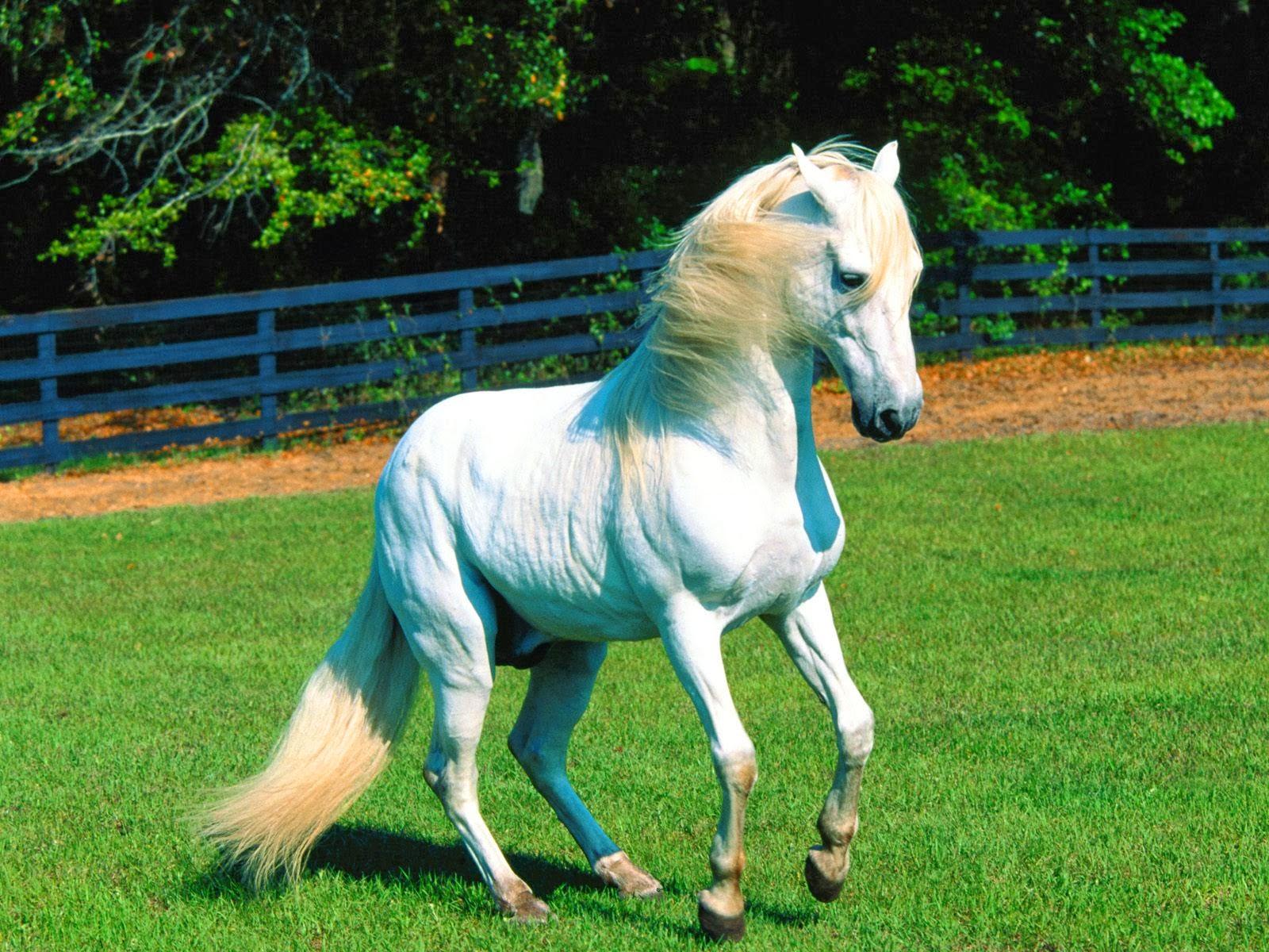 Best   Wallpaper Horse Wall - the-best-top-desktop-horse-wallpapers-3  Pictures_469891.jpg