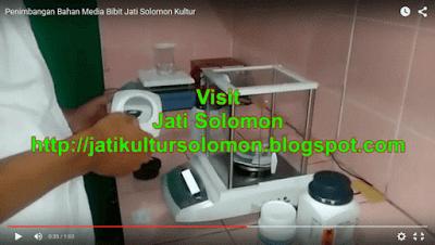 Media_Bibit_Jati_Solomon_Kultur