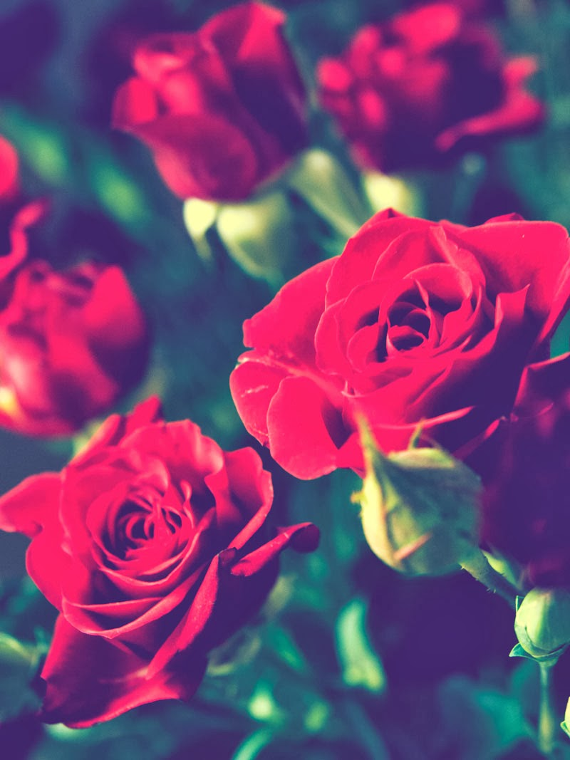 #flowers, #roses, #valentine day