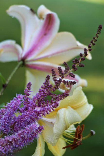 Lilja ja isojaloangervo