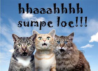 Wallpaper Gambar Kucing Dengan Kata Kata Bangiz