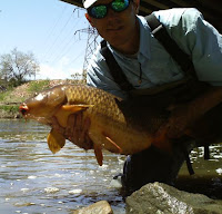 20lb carp caught on a Primordial Crust carp fly
