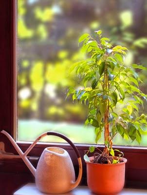 zimmerpflanzen bestimmen so geht 39 s allegretta. Black Bedroom Furniture Sets. Home Design Ideas