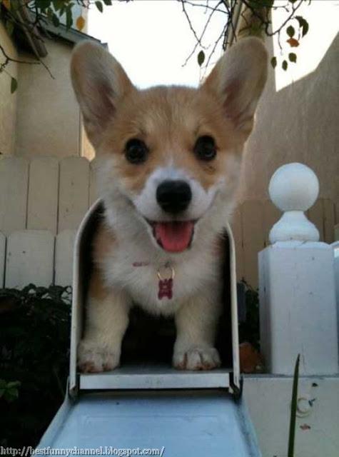Defender mail 2.