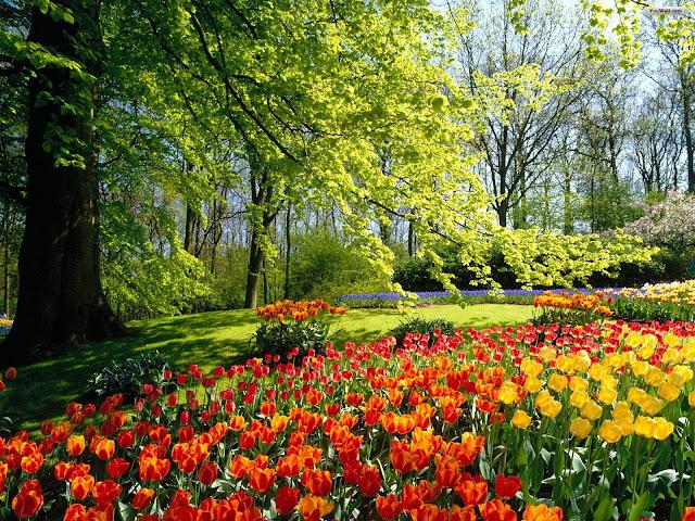 நான் பார்த்து ரசித்த புகைப்படங்கள் சில.... Beautiful+Flower+Garden+Wallpapers+%25286%2529