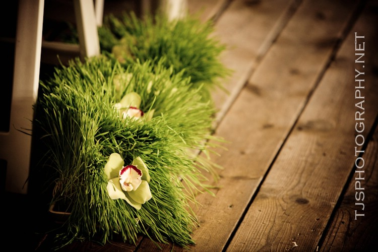 Fun eco friendly project try growing your own wheat grass at home