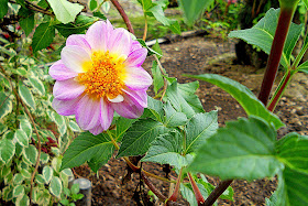 keindahan bunga desa
