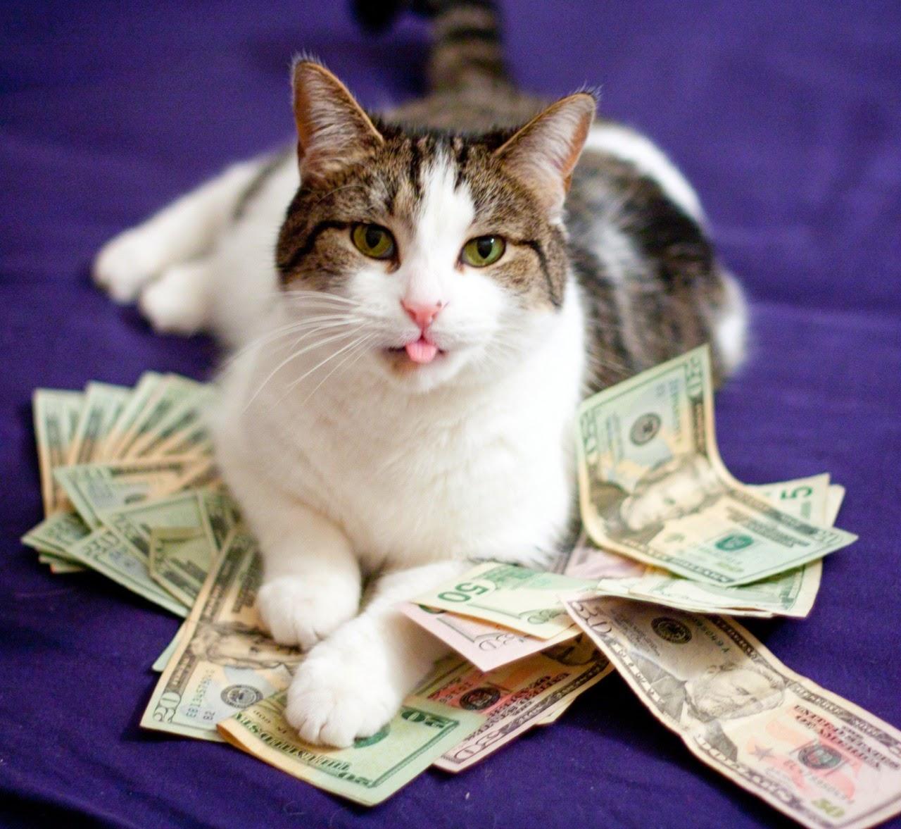 Money cats