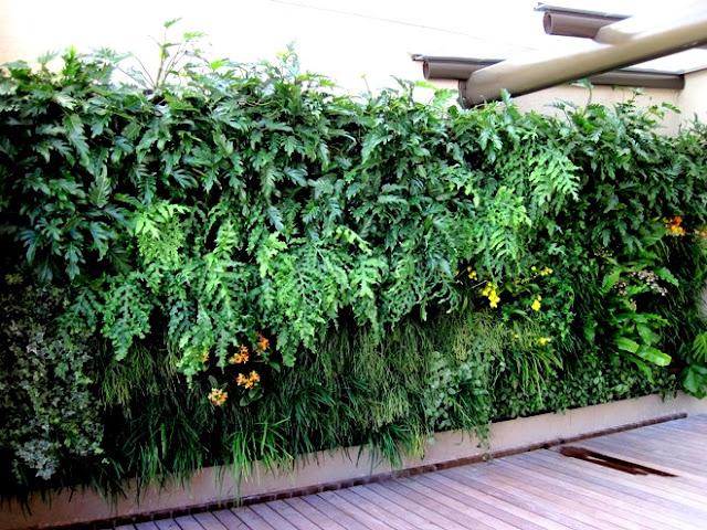 jardim vertical tipos de plantas:cuide de sua planta você terá de regar e podar sua planta