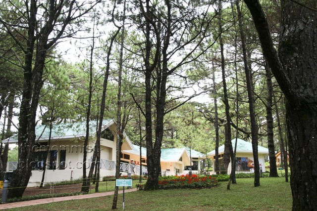 Pine trees and shops at Camp John Hay