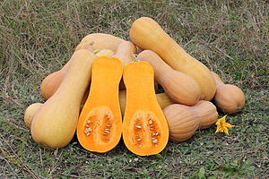 Butternut Squash Halved.  Seed can be scooped out easily.