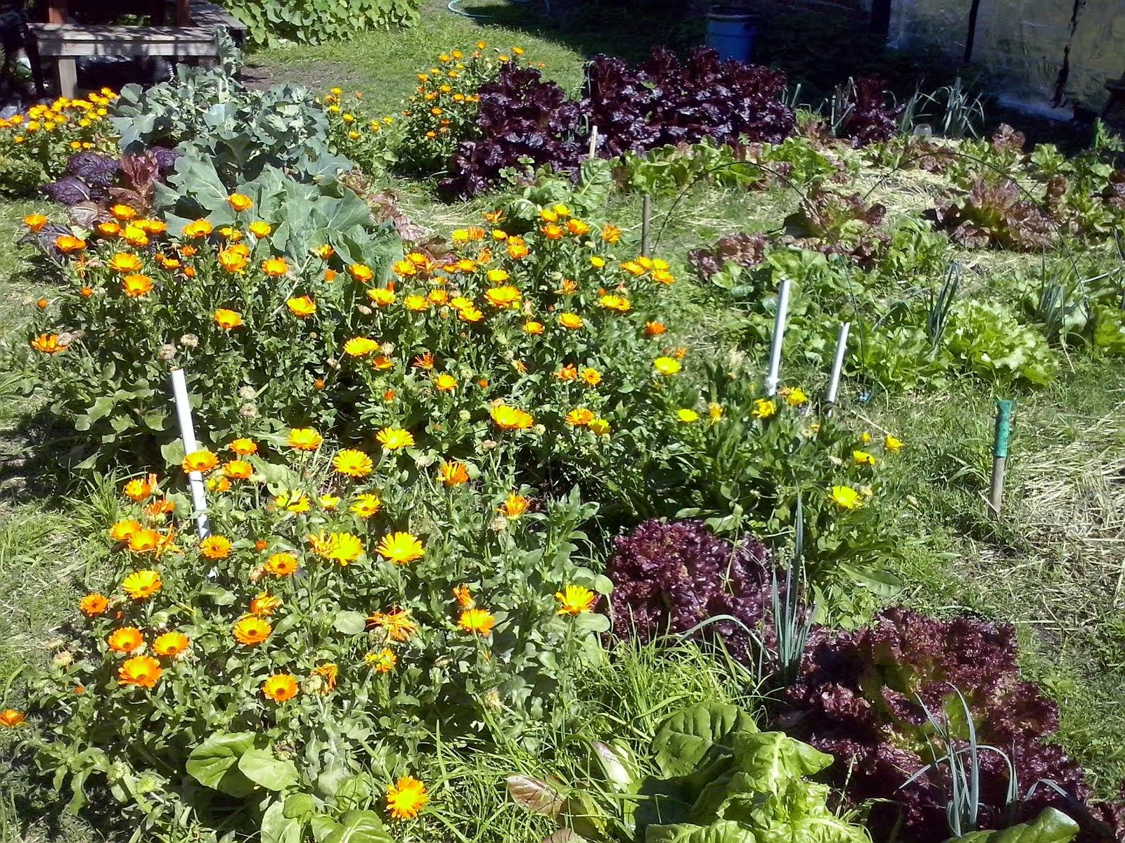 La Huerta Tarpuy Pacha en primavera