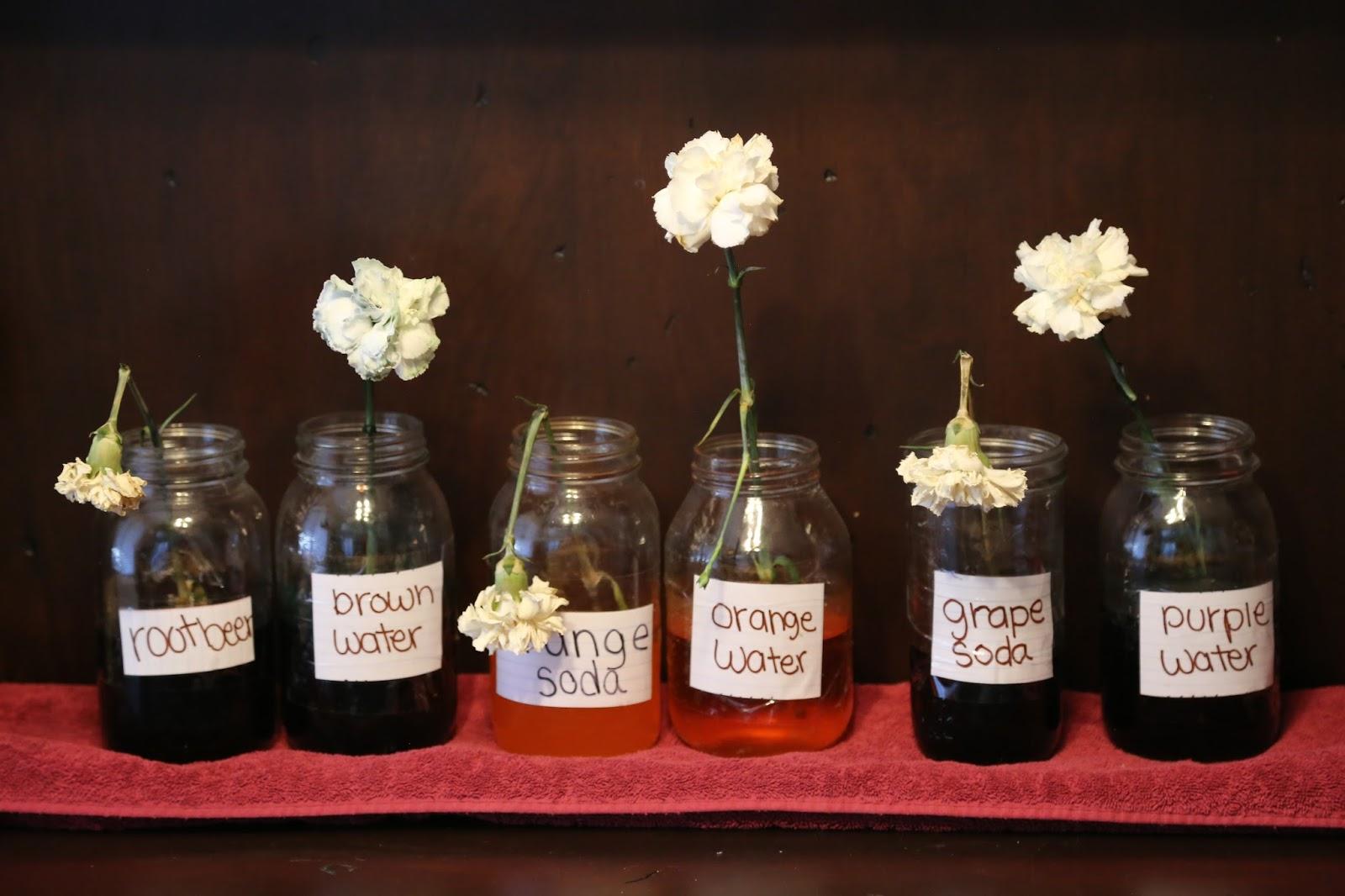 The Heaton\'s: Will Soda dye flowers?