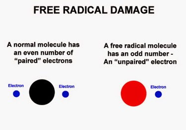 healthy damage from free radicals