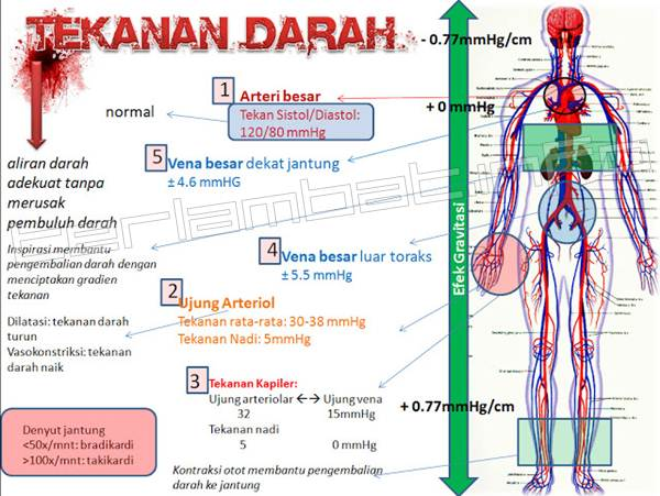 Faktor Mempengaruhi tekanan darah