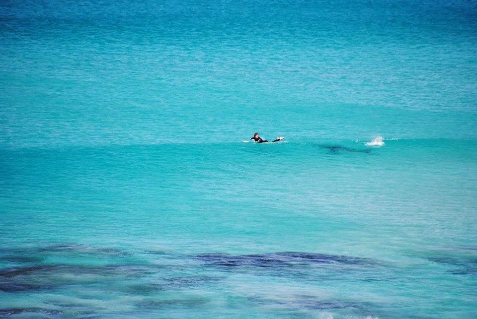 Great white stalks off the waters off West Beach near Esperance, Western Australia.
