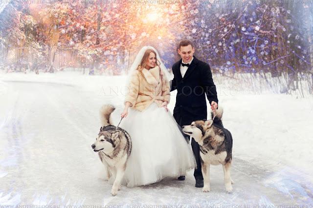 зимняя фотосессия с собаками