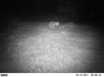 Camera Trap Mammal Photos 3
