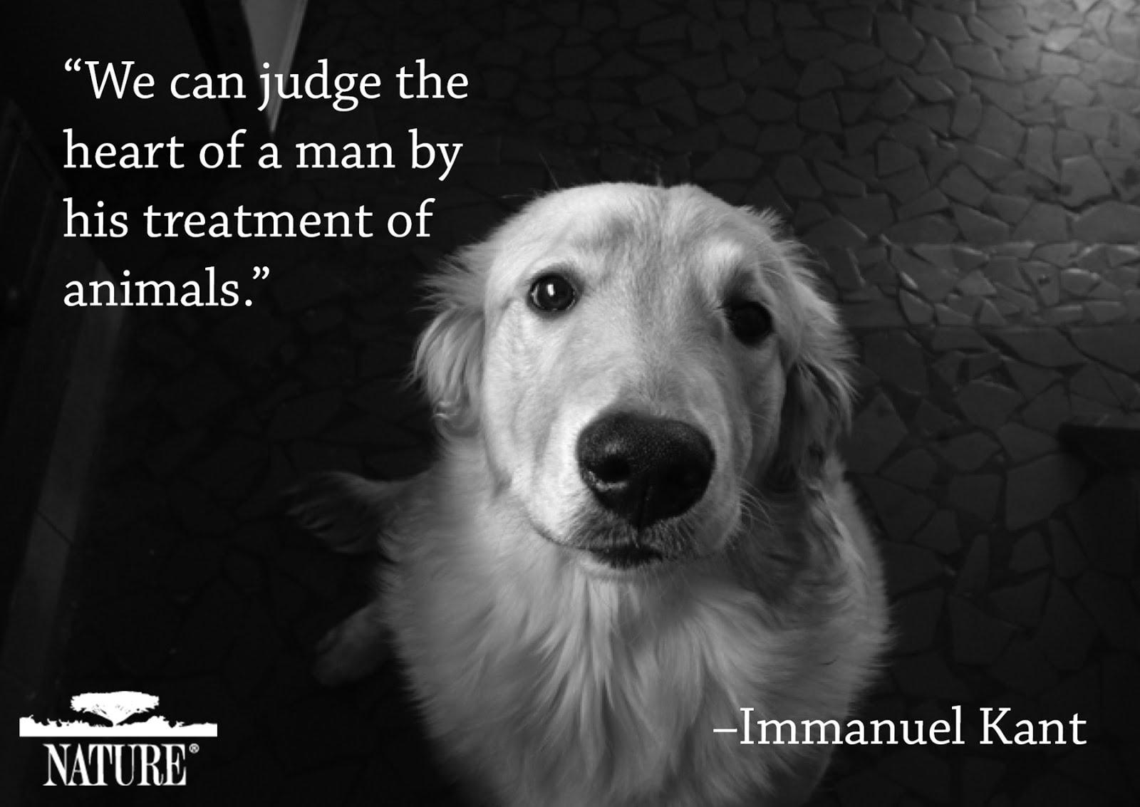 Como tratas a los animales?