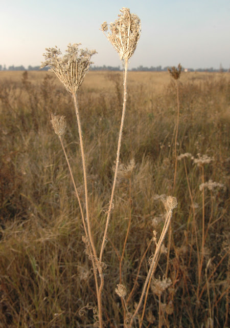 Фото Виталия Бабенко: луг, семена