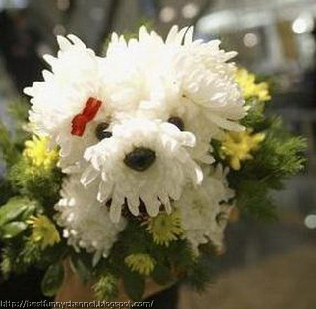 Flower dog.