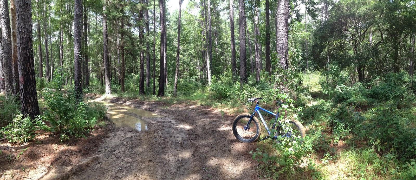 Kisatchie national forest fat bike