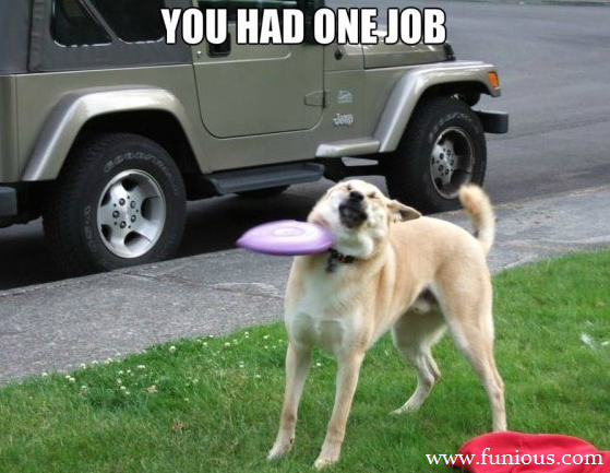 You Had One Job Dog
