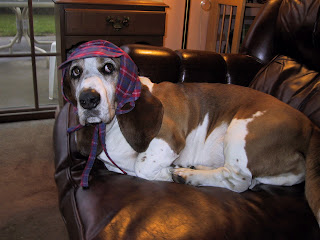 Bassets on the Crime Beat