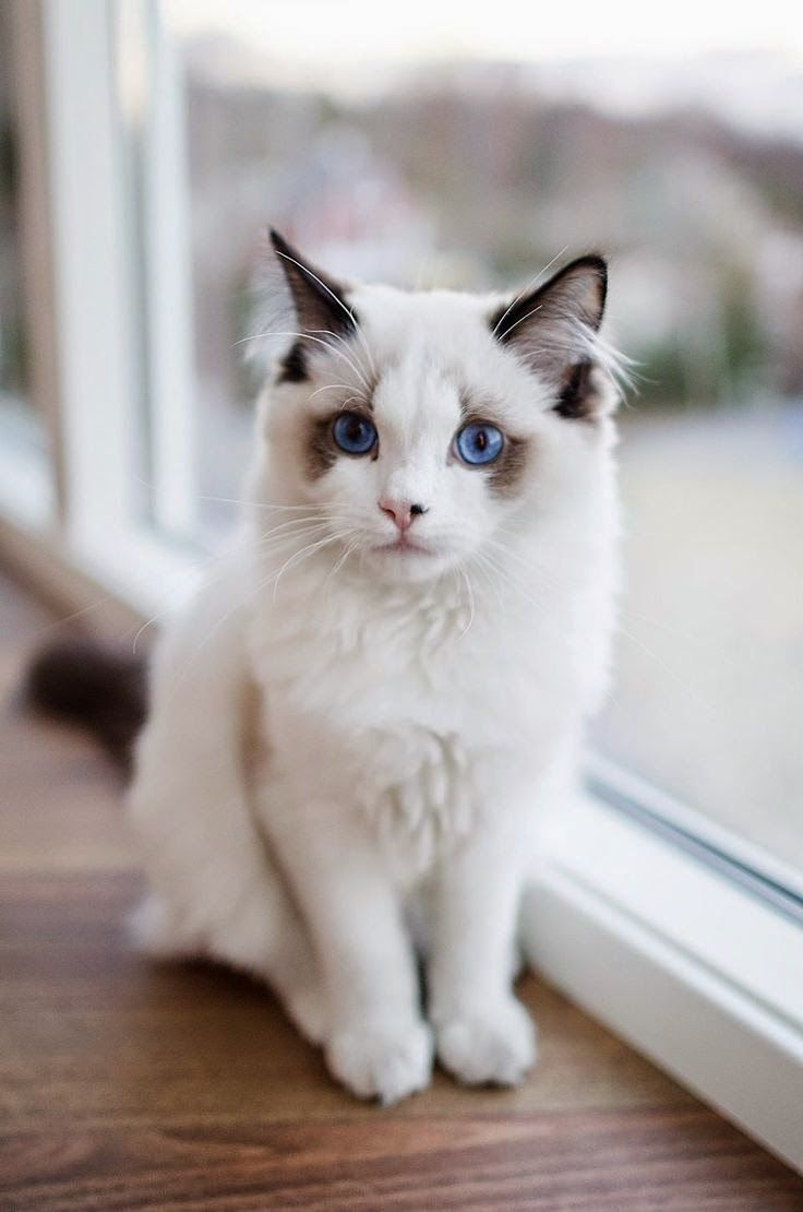 10 Fascinating Facts About Your Cat