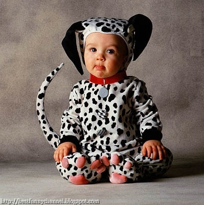 Baby dalmatian.