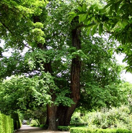 Blog de 6 curso jes s varela pantalones el olmo del for Jardin botanico cursos