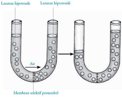 Osmosis dan larutan