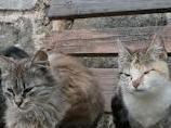 Severe cat dandruff