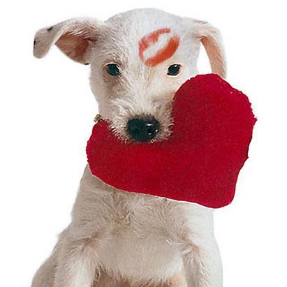 Funny valentine images