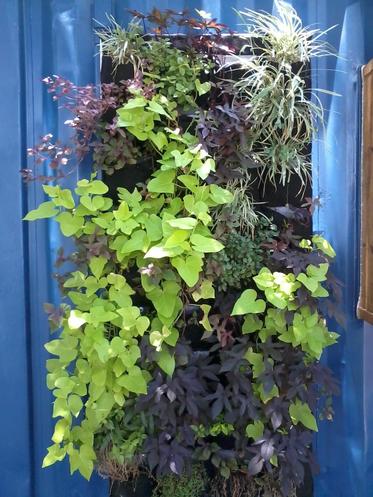 Eco tienda de conveniencia jardin vertical y reuso de for Como se hace un jardin vertical