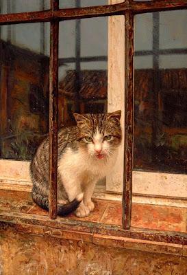 gato-oleo