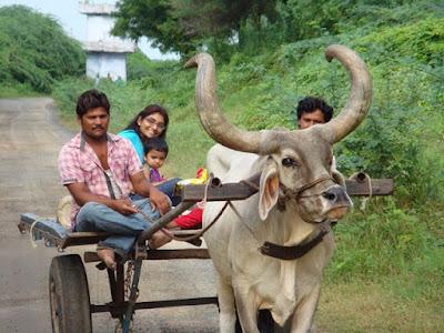 Bullock cart journey