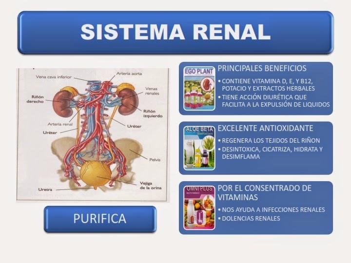 Salud con Omnilife: Sistema Renal