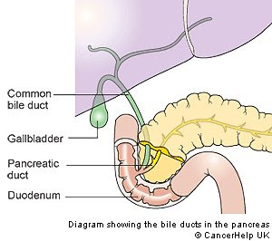 Bile also flows into the duodenum. It contains bile salts, which emulsify fats, making it easier for lipase to digest them.