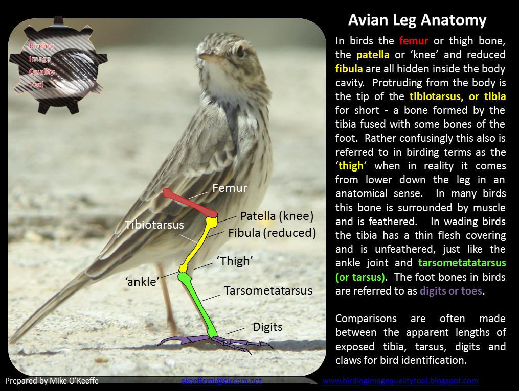 Birding Image Quality Tool: Gestalt - The Limitations of Leg ...