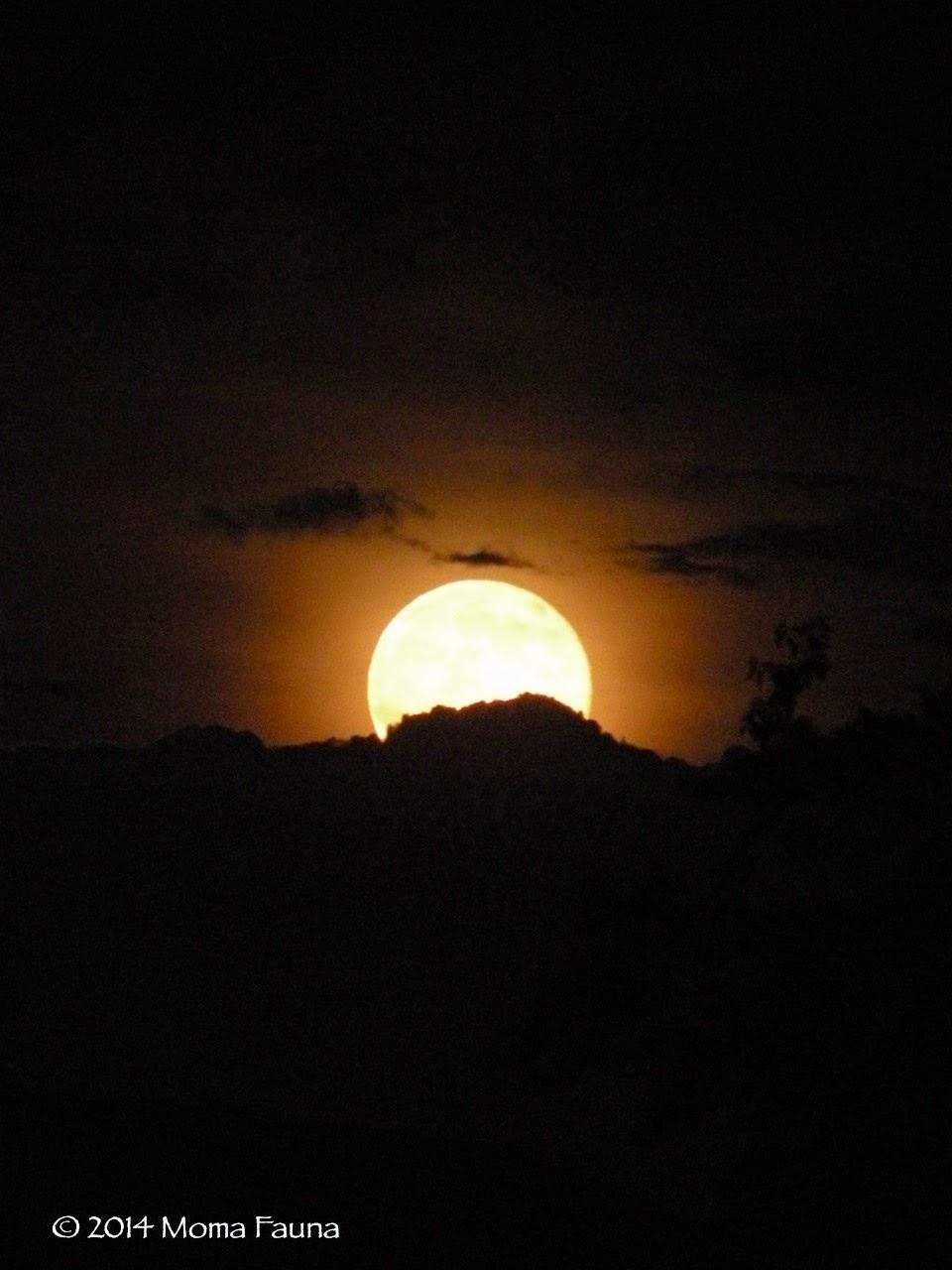 Buck Moon Rising 1