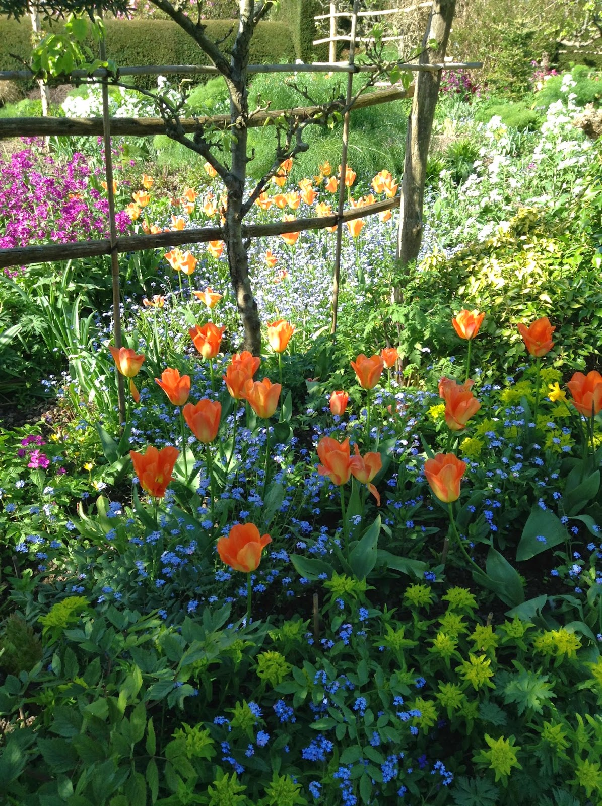 Tulipa, Euphorbia and Myosotis in the Orchard Garden, Great Dixter - Photo by Noemi Mercurelli