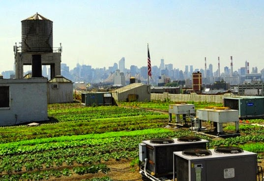 A Roof Garden Is A Differently Designed Garden On The Roof Of Buildings,  Which Is Going Popular In NYC Now A Days. Besides The Decorative Benefit,  ...