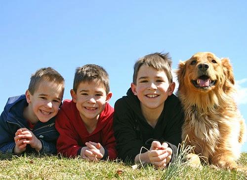 As melhores raças para cães